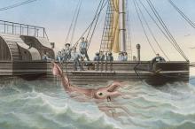 Гигантский кальмар, пойманный французским судном «Алекто». Тенерифе, 30 ноября 1861 года. Изображение: / Mary Evans Picture Library / Globallookpress.com
