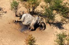 Мертвый слон в парке Ботсваны. Фото: Reuters
