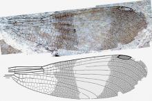 Изображение: Zootaxa