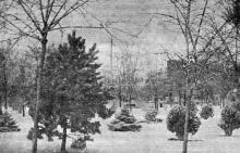 Одесса. Лермонтовский курорт. Молодой парк зимой. Фотография из сборника «Одесса-курорт» Одесского курортного управления, 1934 г.