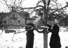 Юннаты Юзилова Г. и Ляховский О. насыпают свежие корма для птиц. Одес. ст. юных натуралистов. Одесса (64)