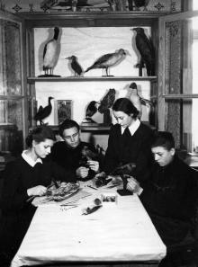 Юннаты зоокружка станции юных натуралистов за изготовлением чучел. Одесса. (66)