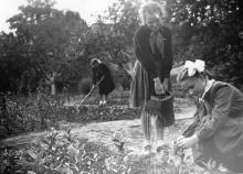 Уход за сеянцами на Одесской станции юных натуралистов. 21.IX.52 г. Одесса. С. Раскин (326)