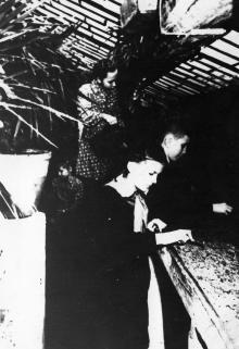 Одесская станция юных натуралистов. В оранжерее. Одесса, 1959 г. Подберезский (2123)