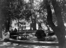 В Одесском зоопарке, пруд с лебедями шипунами. 1950-е годы
