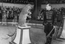 Выступление засл. артиста РСФСР Александрова в Одесском цирке. 27.XII.1951 г. Одесса, А. Фатеев (839)