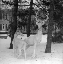 Скульптуры оленей на территории санатория им. Дзержинского. Одесса. 1970-е годы