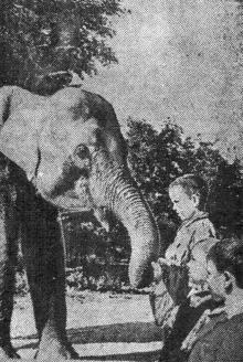 Ребята знакомятся со слоненком «Дели». Фото Я. Левита в газете «Большевистское знамя» 19 сентября 1950 г.