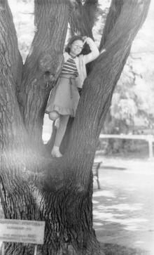 Охранная табличка под деревом: «Памятник природы. Террасный дуб. Год посадки 1860. Охраняется законом». Фотограф Лев Штерн, 1985 г.