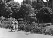 ��������������� �����. ���� ���� ����������� �����, 1950-� ����