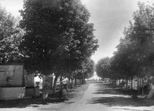 Аллея от ворот к съемочной площадке и морю. Конец 1940-х гг.