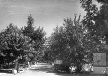 Аллея к корпусу управления и автогаражу. Конец 1940-х гг.