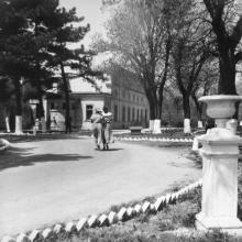 На территории Одесской киностудии, аллея к управлению фабрики (особняку Демидовой-Сан-Донато). 1950-е гг.