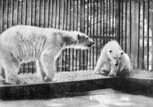 В зоопарке летом. Фото в буклете «Одесса», 1964 г.