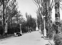 Аллея в  Лермонтовском санатории. Одесса. 1970-е гг.