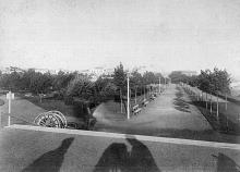Александровский парк, главная аллея, фотография конца XIX века