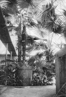 Одесса. Ботанический сад. Почтовая карточка. 1931 г.