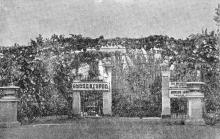 Галерея, увитая виноградом, на перроне Одесского вокзала у выхода в город. Фото в книге «Виноград на стенах домов и во дворах». 1960 г.