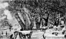 Одесса. Хаджибейский лиман. Главная аллея и пруд в парке. Открытое письмо