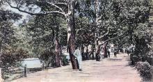 Одесса. Хаджибейский лиман. Парк. Открытое письмо