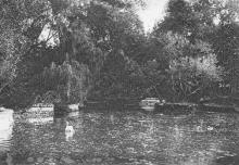 Одесса. Пруд в Хаджибеевском парке. Почтовая карточка. 1930-е гг.