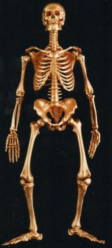 Израиль Рухомовский. «Саркофаг со скелетом». Скелет. (Фото из аукционного каталога «Sotheby-s» за 29 апреля 2013 г.)