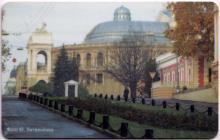 Улица Ланжероновская. Памятник дереву. Фото Ю. Литвиненко на «Социальной карте одессита»
