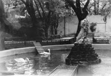 В Одесском зоопарке. 1960-е гг.