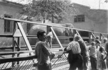 В одесском зоопарке возле слоновника. 1960-е гг.
