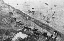 Лошадиный пляж: табун коней с голыми наездниками ворочается в воде. Фото в журнале «Шквал» № 19, июнь, 1925 г.