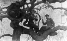 В санатории им. Чкалова. Одесса. 1947 г.