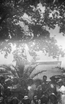 В ботаническом саду. Одесса. 1951 г.