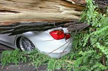 Непогода в Одессе:  ветки придавили автомобили