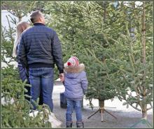 Лес на асфальте: новогодние елки в Одессе