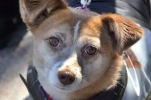 В Одессе впервые состоялся Марш спасенных собак