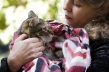 «Кот в мешке» и другие: благотворительная ярмарка в Одессе