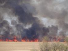 Пламя стеной: масштабный пожар в нацпарке в Одесской области